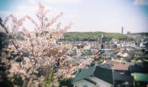 桜満開のこの時期は期待感に満ちる 儚さを感じる桜吹雪まで